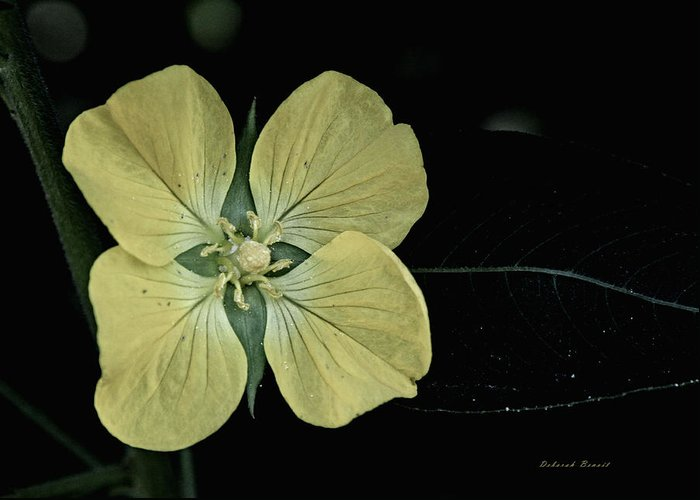 Flower Greeting Card featuring the photograph Golden Wild Beauty by Deborah Benoit