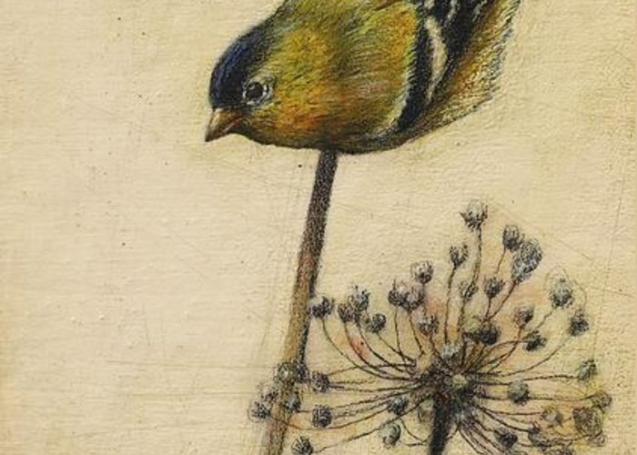Goldfinch Greeting Card featuring the drawing Goldfinch by Lori McNee