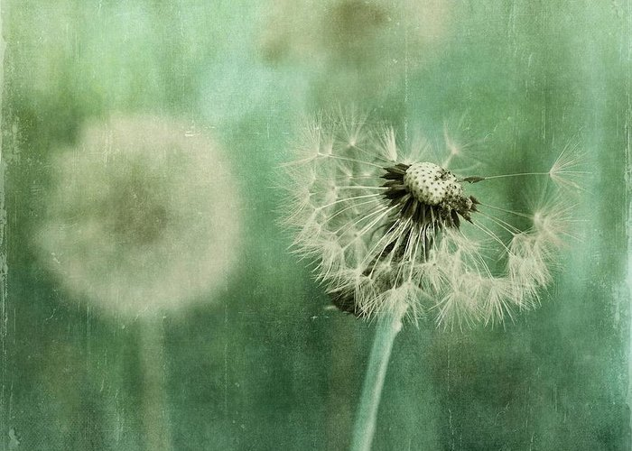Dandelion Greeting Card featuring the photograph Gone by Priska Wettstein