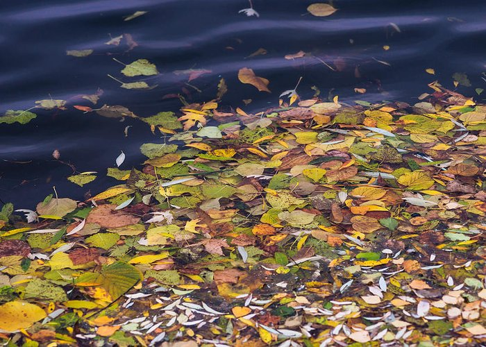 Autumn Greeting Card featuring the photograph Gone With The Water by Alexander Senin