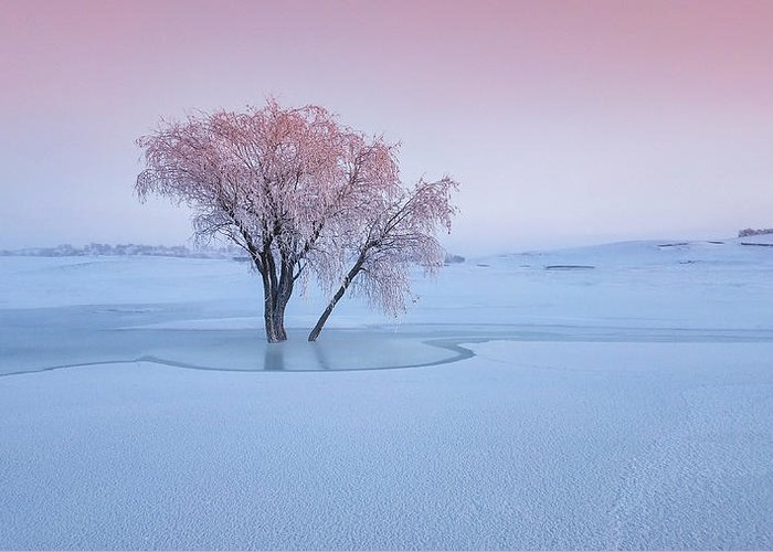 Hoarfrost Greeting Cards