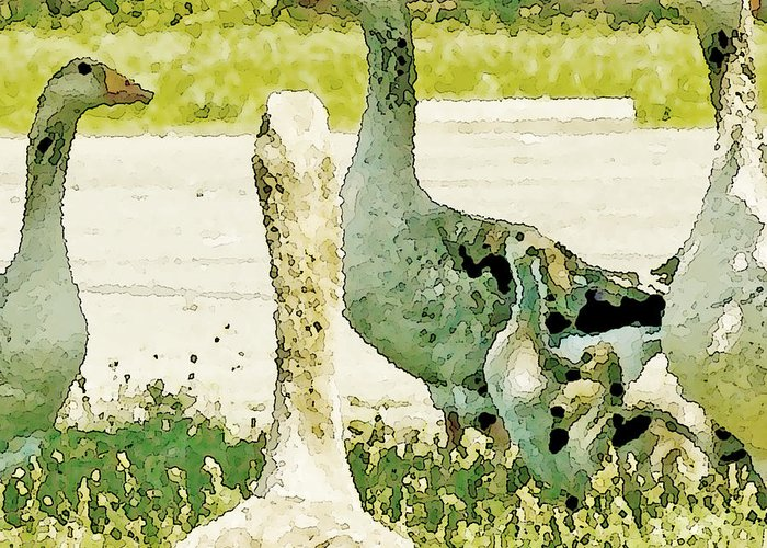 Geese Greeting Card featuring the photograph Goose Chat by Artist and Photographer Laura Wrede