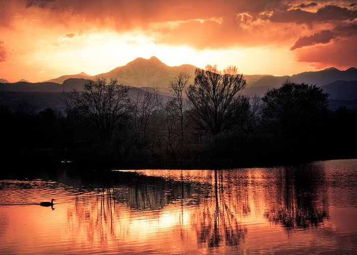 Sunsets Greeting Card featuring the photograph Goose On Golden Ponds 1 by James BO Insogna