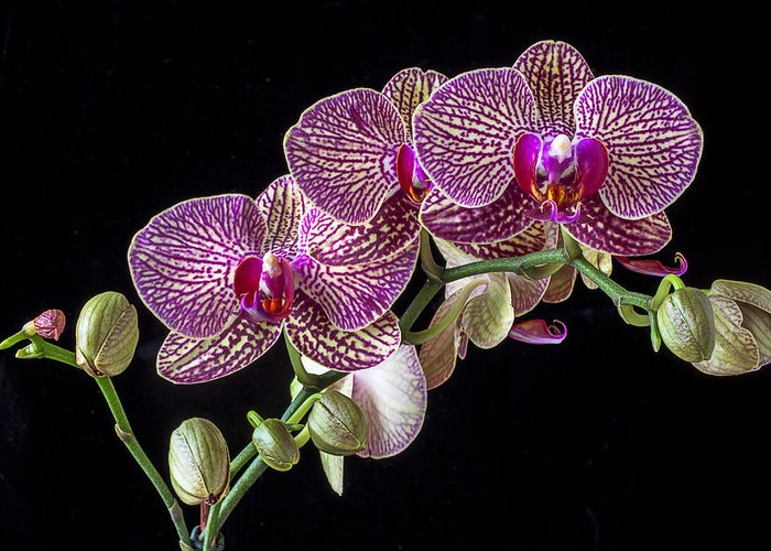 Gorgeous Beautiful Greeting Card featuring the photograph Gorgeous Orchids by Garry Gay