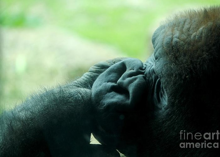 Gorilla Greeting Card featuring the photograph Gorilla Profile by Theresa Willingham