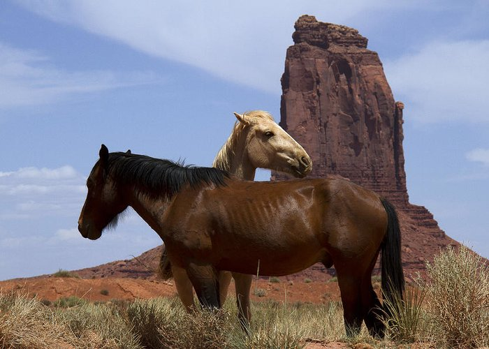 Wild Horses Greeting Card featuring the photograph Got Your Back by Debby Richards
