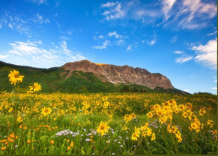 Colorado Landscapes Greeting Card featuring the photograph Gothic Meadow by Darren White
