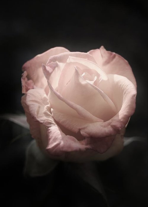 Rose Greeting Card featuring the photograph Gothic Rose by Joe Bull