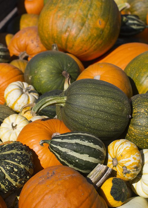 Thanksgiving Greeting Card featuring the photograph Gourds by Rebecca Cozart