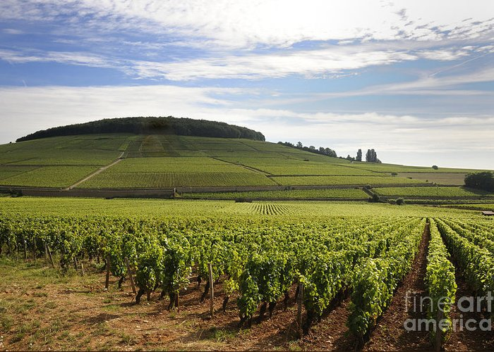 Agriculture  Greeting Card featuring the photograph Grand Cru And Premier Cru Vineyards Of Aloxe Corton. Cote De Beaune. Burgundy. by Bernard Jaubert
