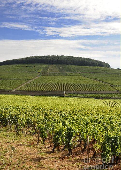 Agriculture  Greeting Card featuring the photograph Grand Cru And Premier Cru Vineyards Of Aloxe Corton. Cote De Beaune. Burgundy. France. Europe. by Bernard Jaubert