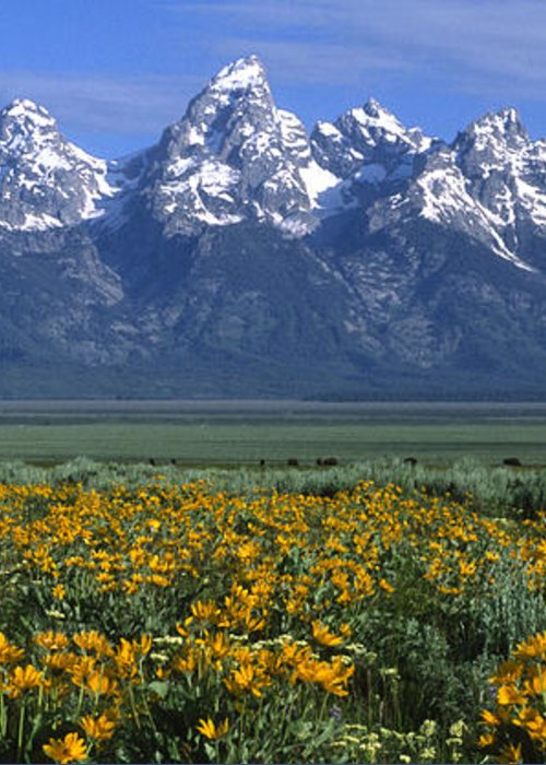 Grand Teton Greeting Card featuring the photograph Grand Teton Summer by Sandra Bronstein