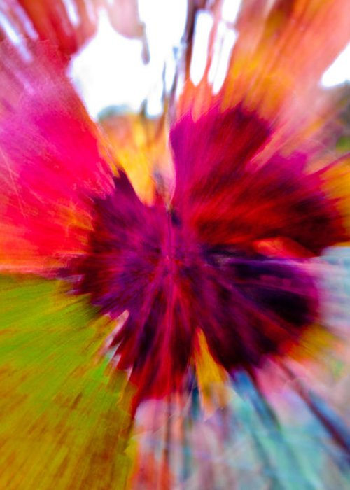 Grapevine Greeting Card featuring the photograph Grape Vine Burst by Bill Gallagher