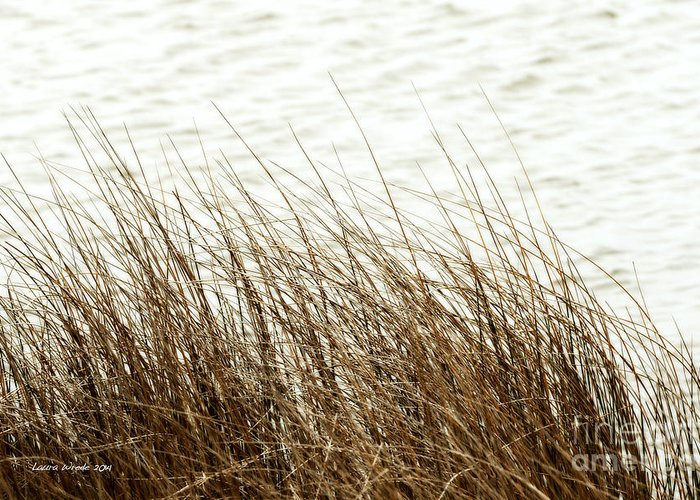 Shore Of Virginia Beach Greeting Card featuring the photograph Grass Down By The Shore Of Virginia Beach by Artist and Photographer Laura Wrede