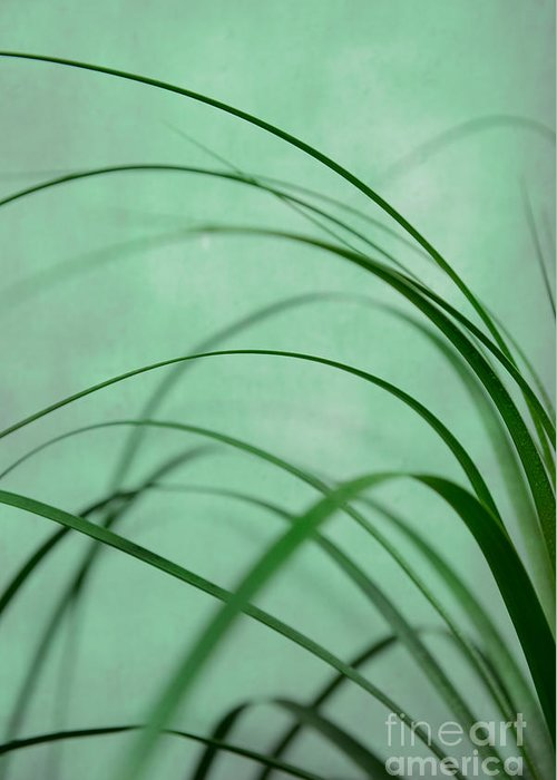 Flow Greeting Card featuring the photograph Grass Impression by Hannes Cmarits