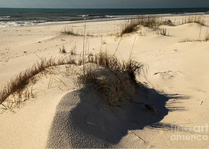 St Joseph Peninsula State Park Greeting Card featuring the photograph Grassy Dunes by Adam Jewell