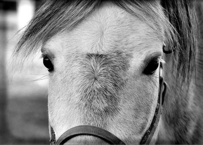 Horse Greeting Card featuring the photograph Gray On Gray by JAMART Photography