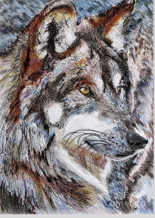 Mccombie Greeting Card featuring the drawing Gray Wolf Watches And Waits by J McCombie