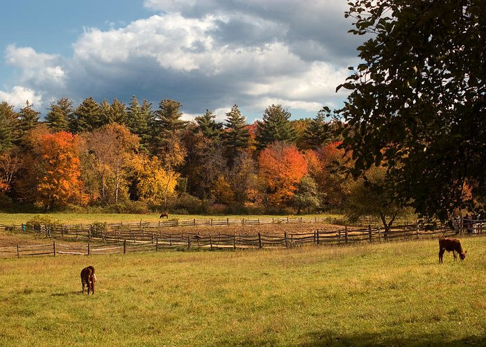 Autumn Greeting Card featuring the photograph Grazing On The Farm by Joann Vitali
