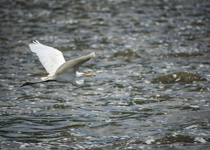 Bird Greeting Card featuring the photograph Great Egret by Kate Houlne