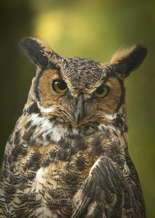 Art Greeting Card featuring the photograph Great Horned Owl by Randall Nyhof