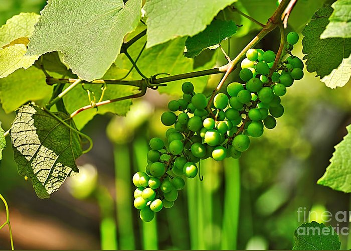 Green Berries Greeting Card featuring the photograph Green Berries by Kaye Menner