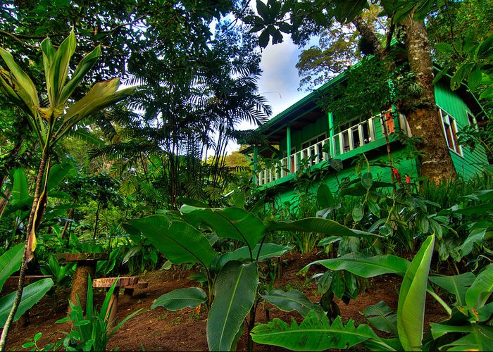 Costa Greeting Card featuring the photograph Green Costa Rica Paradise by Andres Leon
