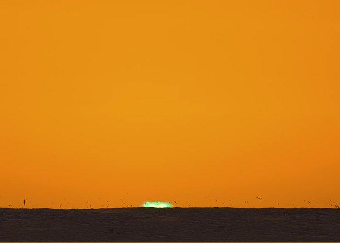 Green Flash Greeting Card featuring the photograph Green Flash Bird Pile by Sean Davey