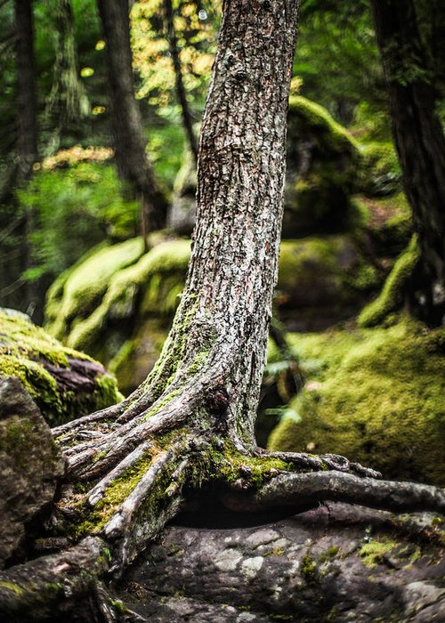 Tree Greeting Card featuring the photograph Green Forest by Aaron Aldrich