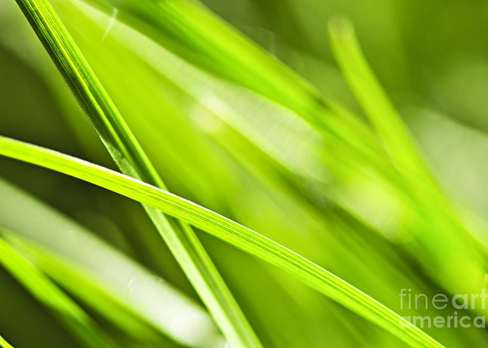 Grass Blade Greeting Cards