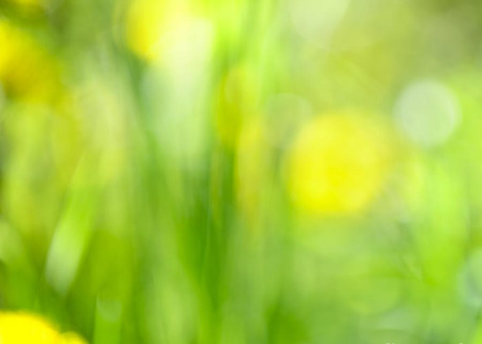 Green Greeting Card featuring the photograph Green Grass With Yellow Flowers Abstract by Elena Elisseeva