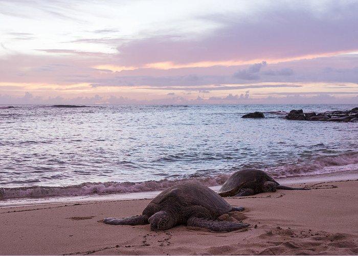 Endangered Hawaiian Green Sea Turtles Of Sea Turtle Beach Oahu Hawaii Hi At Sunset Greeting Card featuring the photograph Green Hawaiian Sea Turtles At Sunset - Oahu Hawaii by Brian Harig