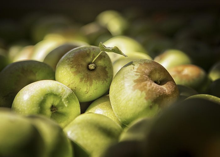 Apples Greeting Card featuring the photograph Green Jewels by Caitlyn Grasso