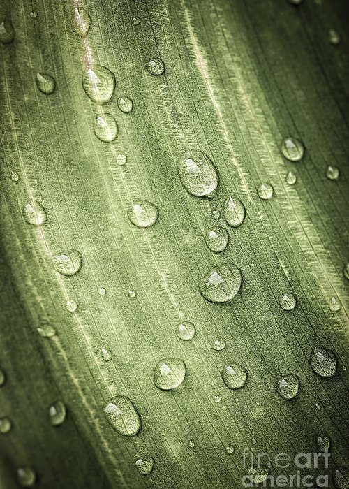 Plant Greeting Card featuring the photograph Green Leaf With Raindrops by Elena Elisseeva