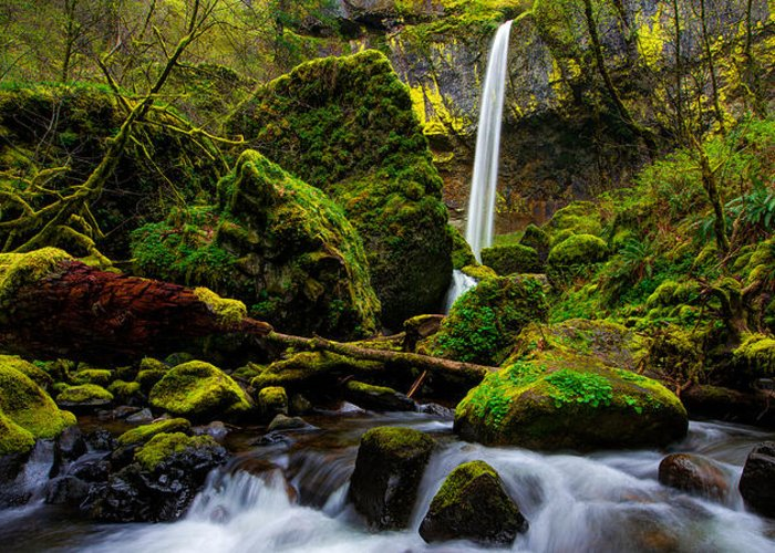 Pacific Greeting Card featuring the photograph Green Seasons by Chad Dutson