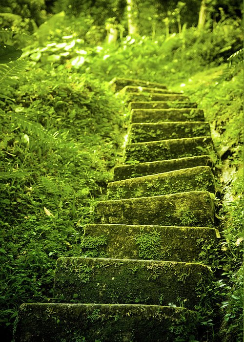 Tropical Rainforest Greeting Card featuring the photograph Green Stair by Pixalot