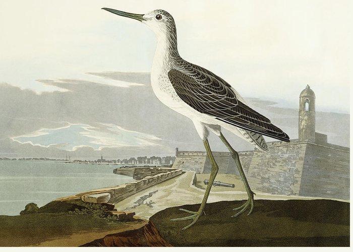 John James Audubon Greeting Card featuring the painting Greenshank by John James Audubon