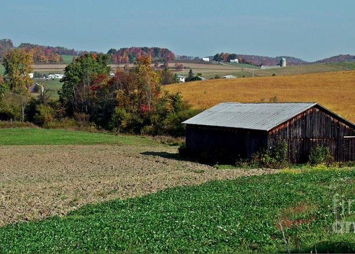Barn Greeting Card featuring the photograph Groomed For Harvest by Christian Mattison
