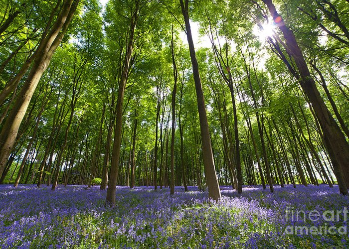 Bluebells Greeting Card featuring the photograph Ground Level Bluebells by Richard Thomas