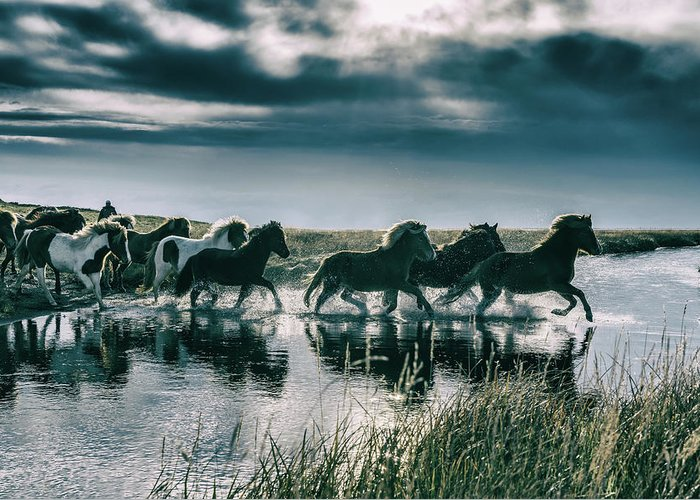Horse Greeting Card featuring the photograph Group Of Horses Crossing A River by Arctic-images