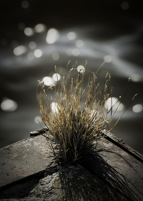 Grasses Greeting Card featuring the photograph Growing Out Of Nothing by Thomas Young