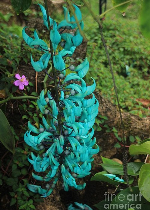 Jade Vine Greeting Card featuring the photograph Growing Turquoise by Kris Hiemstra