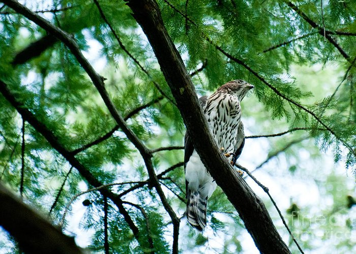 Wildlife Greeting Card featuring the photograph Guardian by Barbara Shallue