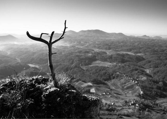 Landscapes Greeting Card featuring the photograph Guardian by Davorin Mance