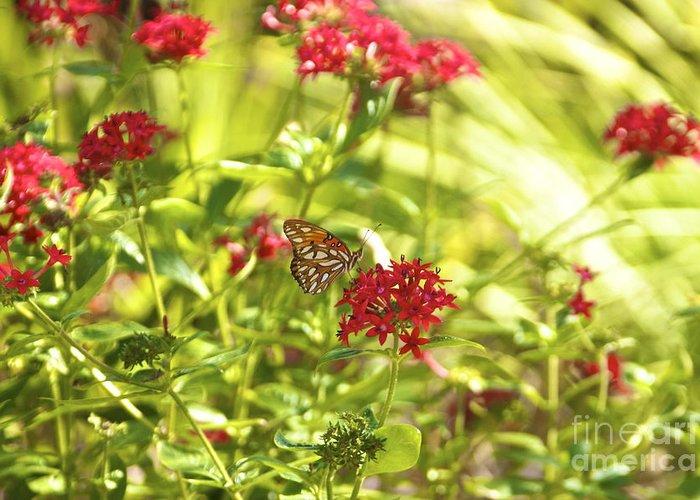 Gulf Fritillary Butterfly Greeting Card featuring the photograph Gulf Fritillary Butterfly by Amazing Jules