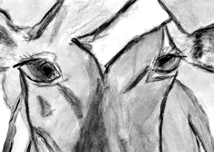 Cow Greeting Card featuring the drawing In The Window by Elizabeth Briggs