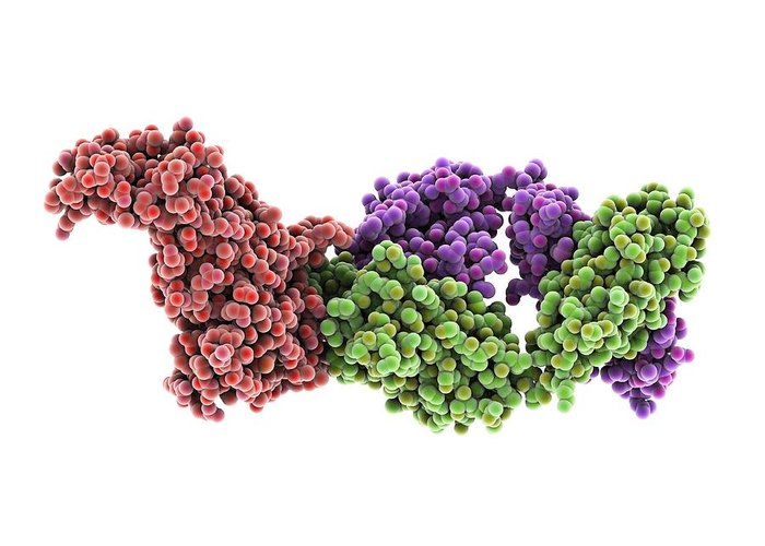 Haemagglutinin Greeting Card featuring the photograph Haemagglutinin Viral Surface Protein by Science Photo Library