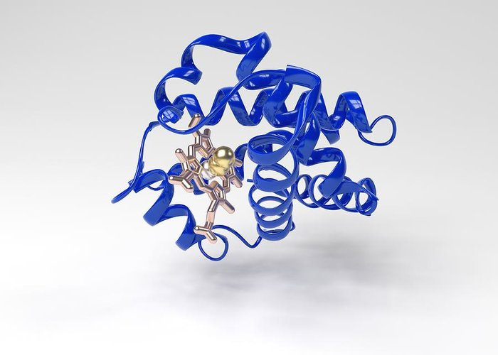 Alpha Helix Greeting Card featuring the photograph Haemoglobin Molecule by Science Photo Library