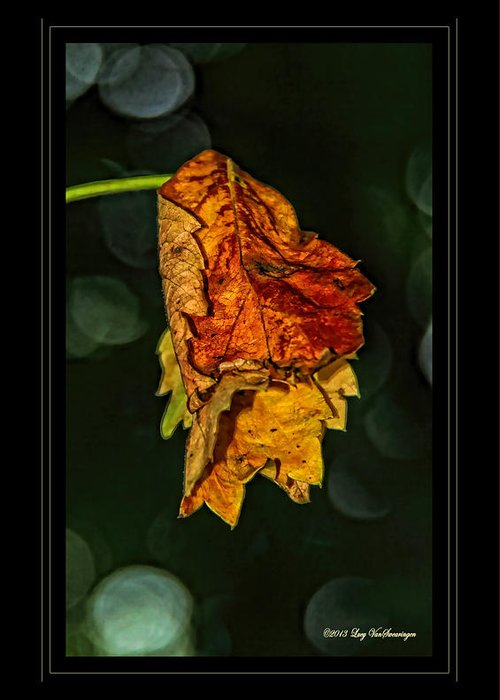 Fall Leaves Photograph Greeting Card featuring the photograph Hanging Gold framed by Lucy VanSwearingen