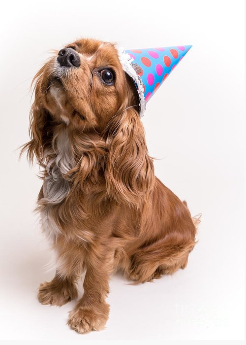 Canine Greeting Card featuring the photograph Happy Birthday Dog by Edward Fielding